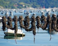Moules de corde Italie